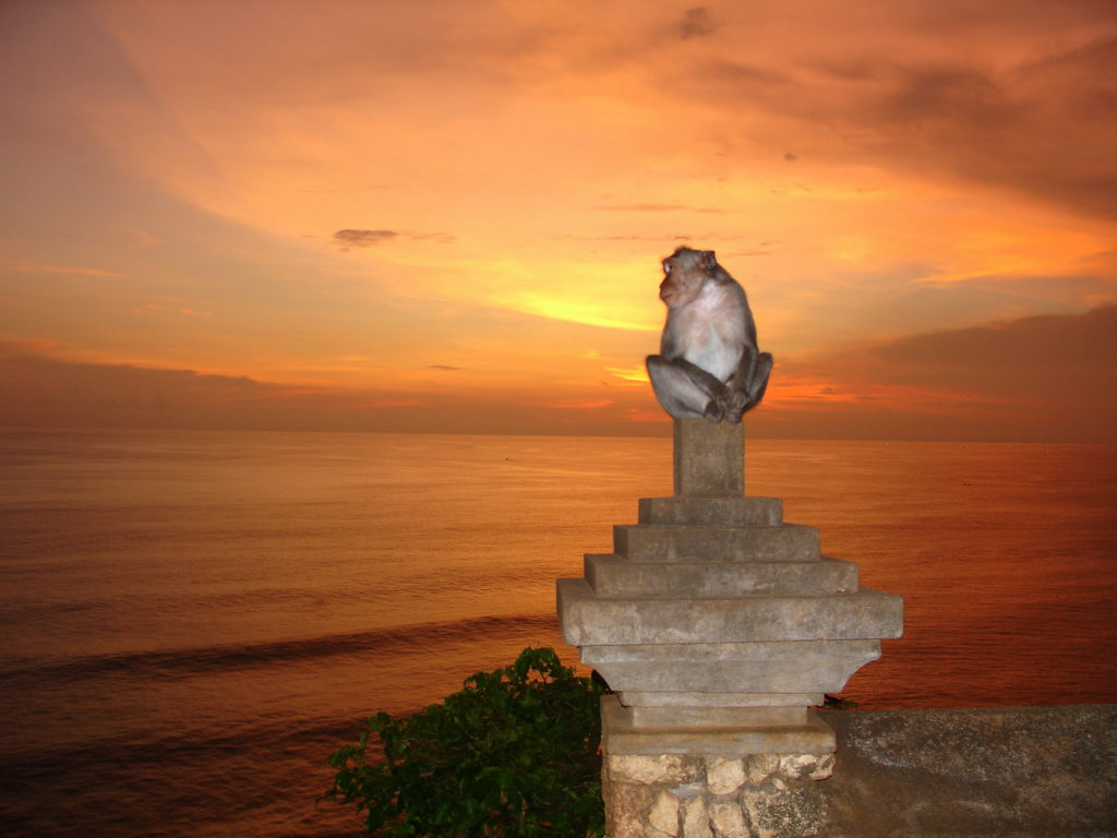 Bali Attractions: Uluwatu Monkey