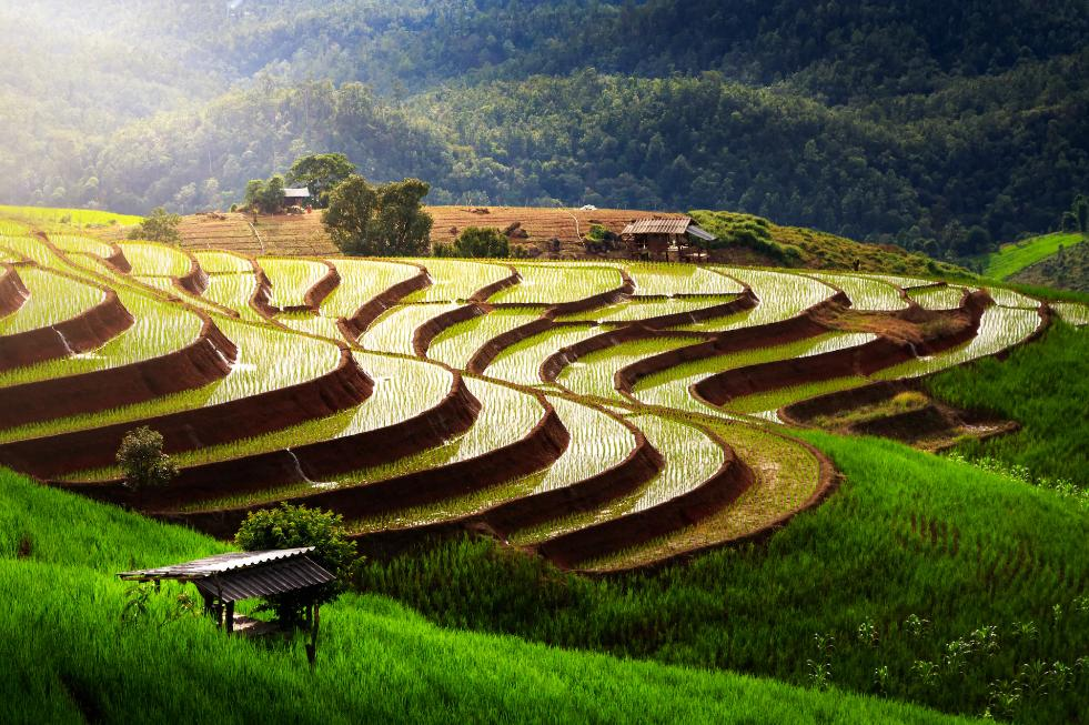 best time to visit-thailand rice fields